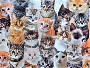 Dekorleinen Katzen