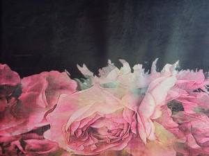 Bordüren-Jersey mit Rosen
