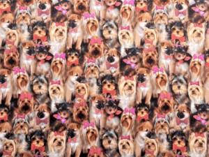 Baumwoll-Jersey Hundchen