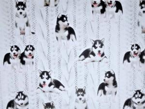 Baumwoll-Jersey Husky weiß
